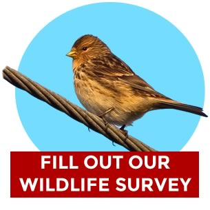 wildlife_survey